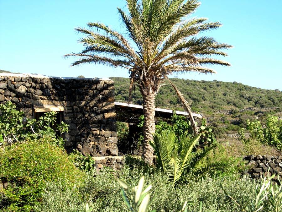 Giardino del dammuso palma.
