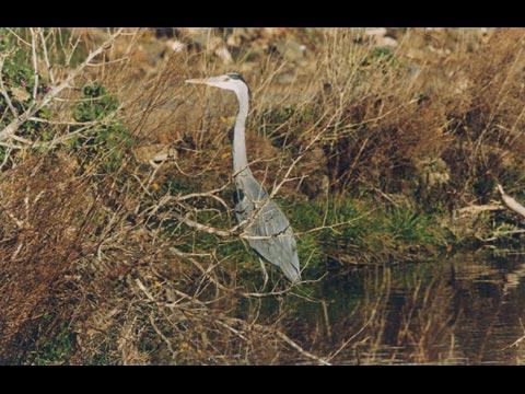 Uccelli a Pantelleria