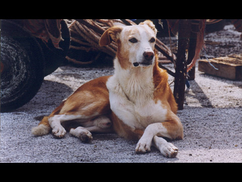 Fauna di Pantelleria