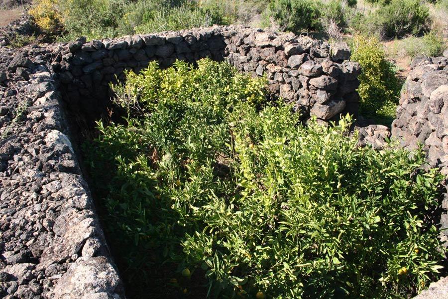 giardini panteschi abitati da alberi d'agrumi e d'ulivi
